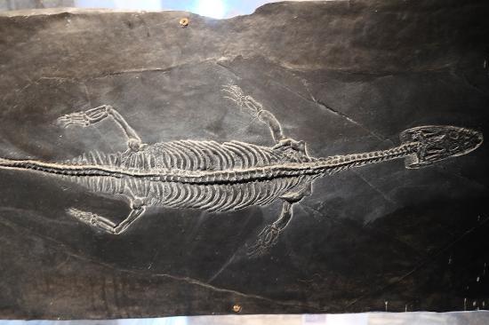 Il mostro del Lago di Como, il Lariosauro